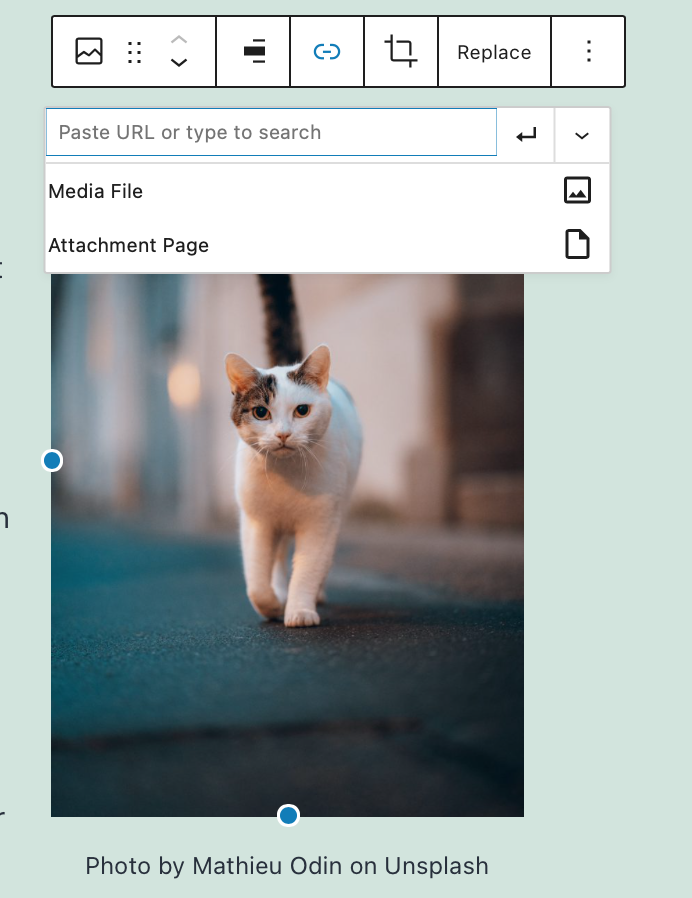 Your image can link to an Attachment Page, Media File, or Custom URL.